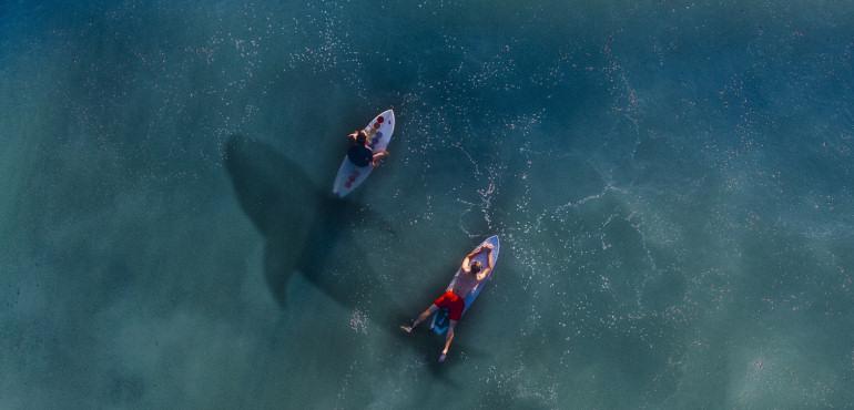 Surf y tiburones
